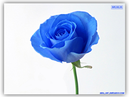 blue flower  flowers  nature background wallpapers on desktop, Beautiful flower