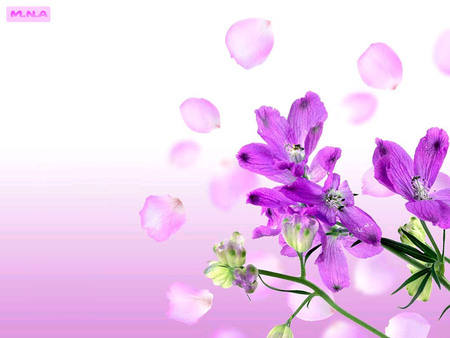 Violet Flowers - rose, flowers, colorful flower, colorful flowers, colors, color, mna, flower, violet, nature