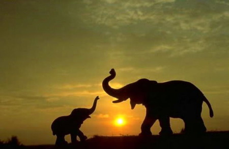 mothers love elephants amp animals background wallpapers