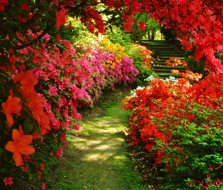 Beautiful Garden - flowers, garden, beutiful, red, nature, azalea