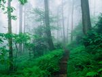 Appalachian Trail Along Foggy Ridge, Smoky Mountains, Tennessee