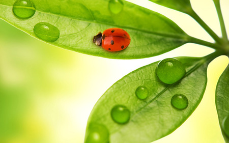 Ladybird - abstract, green, raindrops, ladybird