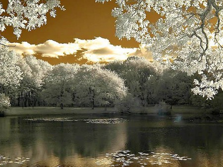 beautiful_nature - lake, cool, white trees, beautiful, nature
