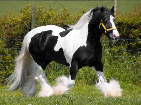 black and white horses animals background wallpapers. Black Bedroom Furniture Sets. Home Design Ideas