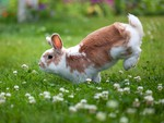 Beautiful Bunny