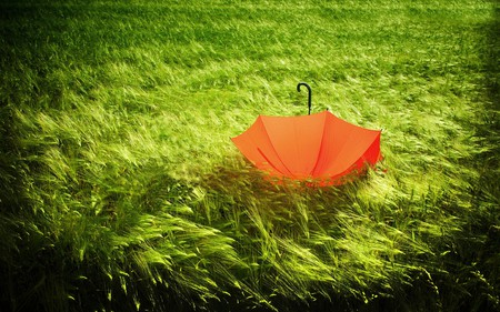 So Beautiful - grass, photography, peaceful, romantic, abstract, sweet, orange, alone, landscape, colors, splendor, nice, wheat, nature, beauty, beautiful, lovely, romance, field, pretty, green, umbrella