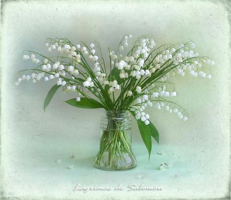 Still life - flowers, flower, snow drops, white, nature, fantasy, snowdrops