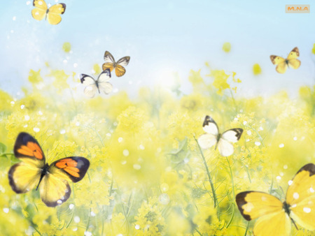 Yellow Flowers & Butterfly - rose, flowers, colorful flower, colorful flowers, colors, color, mna, flower, nature