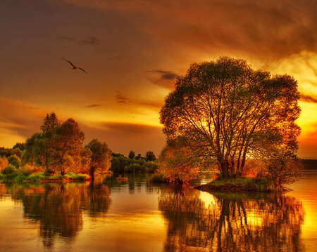 sunset - landscape, water, autumn sunset, sunset, nature, tree, laks, waterscape