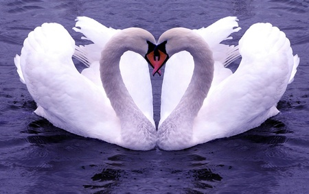 Love Sign / Liebeszeichen - swan, wds, sign, mothers day, heart, birthday, valentine, widescreen, its so cool, love, valentines day, valentines, i love you