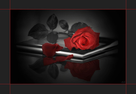 Red rose - Flowers &am...