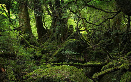 rainforest - scene, hot, rainforest, nature