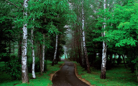 Forest - green, trees, road, forests, nature