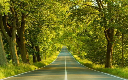 Highway - highway, photography, trees, nature