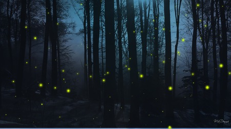 Firefly Nights - trees, blue, night, firefox persona, dark, fireflies, widescreen, forest, woods