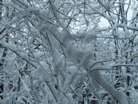Magical Matrix of Snowy Arms - blizzard, trees, snow, ice, winter, snowstorm, branches