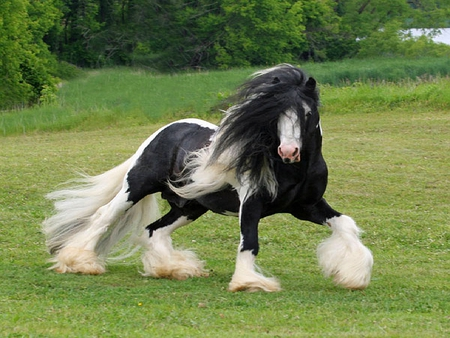 PRETTY HORSE - horse, pretty, black, white