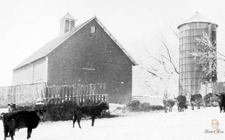 Grandpa's Barn & Silo in Winter - barn, farm, old, rural, iowa, cows, winter