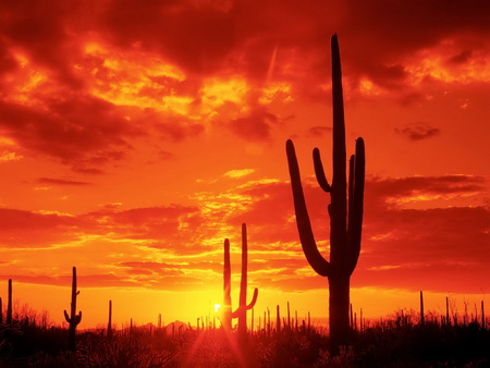 Sunset Desert - cactus, sundown, sunset, desert, red