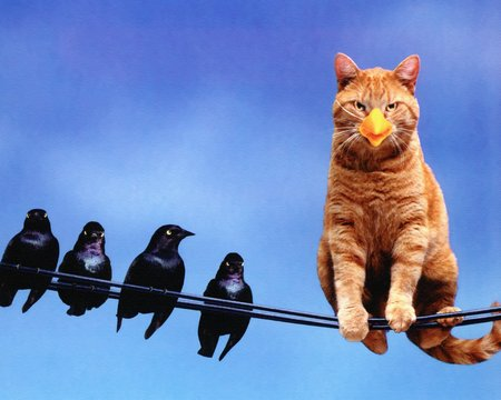 I'm a bird (: - brid, animals, cat