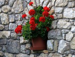 Potted Geraniums in Granite Wall