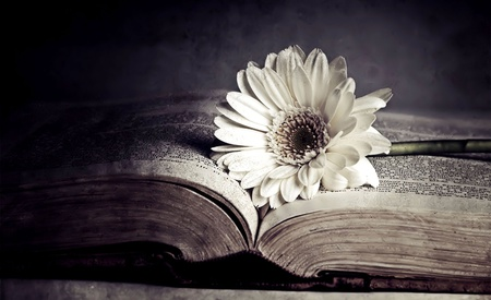 With Love - flowers, with love, beautiful, old, lovely, romantic, nice, photography, love, nature, book