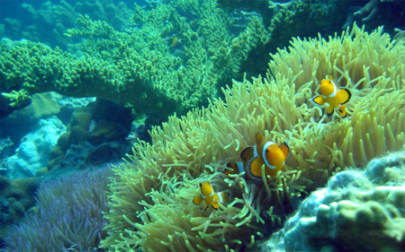 coral reef - water, fish, coral, reef