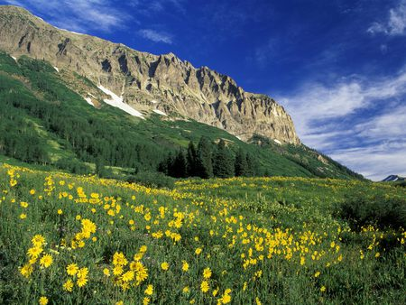 Alpine-Meadow - meadow, mountains, flowers