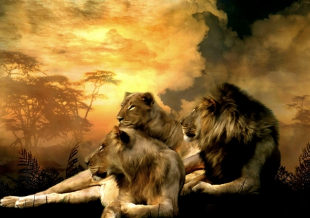 THE KING AND QUEENS - lion, queens, lioness, king, wild