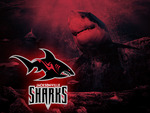 Jacksonville Sharks Wallpaper