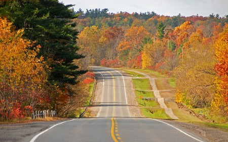 Highway - trees, road, highway, forests, nature, autumn