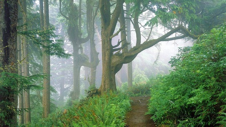 Forest path - colorful, olorful, colors, tree, trees, nature, amazing, forest, beautiful, plant, fog, pretty, green, mist, way