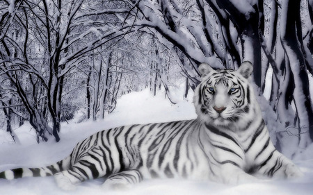White Tiger - kev, tiger, trees, cat, white, snow, whitetiger