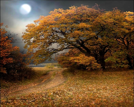 MOON FALL - scenery, trees, path, overcast, fall, autumn, light, moon, forest
