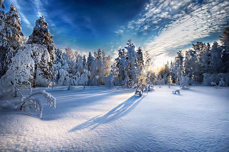 Morning Snow - shadow, sunrise, trees, sky, snow, bright, beauty