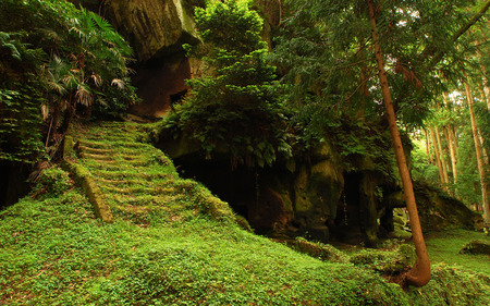 Beautiful - splendor, rocks, ancient, steps, forest, green, trees, other, fern, jungle, moss, home, park, peaceful, spring, beautiful, secret, tree, view, beauty, landscape, stairs, cave, green carpet, underground, caves, grass, tree trunk, burial grounds, woods, field, lovely, carpet, branches, leaves, nature, temple, staircase
