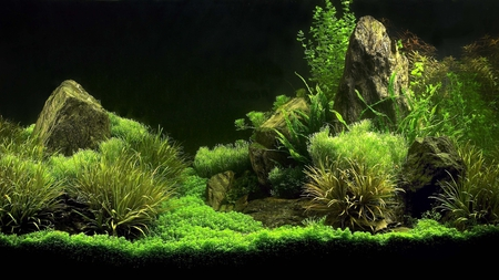 beautiful aquarium - aquarium, water, plants, beautiful