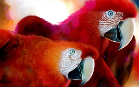 A Pair Of Parrots - animals, tropical, parrots, colorful african, red, art, exotic, birds
