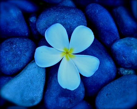 Comments on pretty flower with pebbles flowers wallpaper id 355720 pretty flower with pebbles mightylinksfo