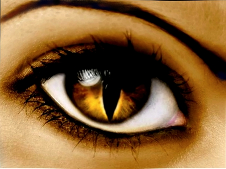 CAT's EYE  - woman, brow, cornea, brown, eye, cat eye, lashes