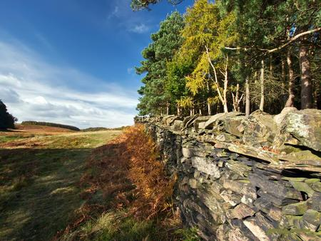 Stone Wall And Trees - trees, brush, sky, stone wall, blue, nature
