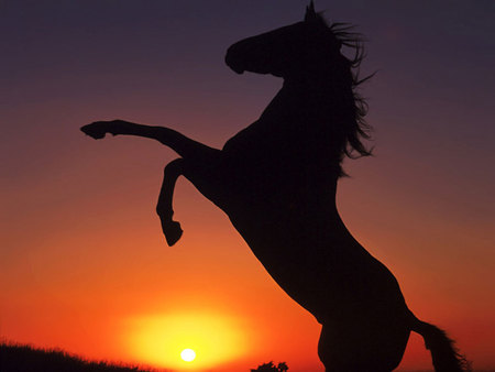 Horse in the sunset - horse, sunset, animal, cavalo