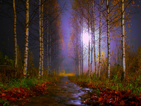 RAINY WEATHER - sky, mist, path, dark, birches, weathe, r rain, fog, forest