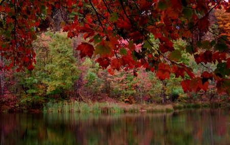 RED FALL LAKE - lake, trees, red tree, fall, red fall tree lake, autumn, red fall, fall leaves, leaves, colors of autumn, autumn leaves, autumn waterfall, colors of fall, red, beautiful autumn path