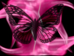 Hot pink butterfly!