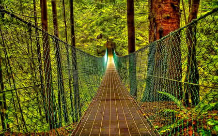 Bridge Of Destiny - bridge, nature, path, forest, journey, beauty