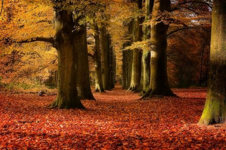 magic forest - leaves, trees, red, nature, forest, yellow