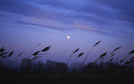 Light breeze (WDS) - wds, photography, widescreen, field, fields, light breeze, night