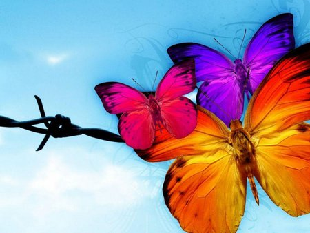 THE BUTTERFLY - colorful, red, blue, pink, butterfly, orange, purple