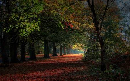 wonderland - leaves, tree, forest, autumn